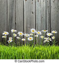 цветы, забор