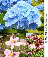 цветы, коллекция, лето