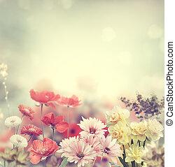 цветы, красочный