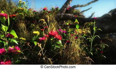 цветы, луг