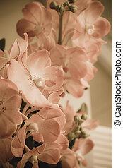 цветы, марочный