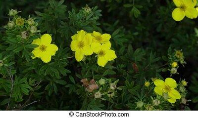 цветы, перемещение, wind., садоводство, цвести, close-up.,...