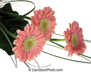 цветы, розовый