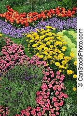 цветы, сад