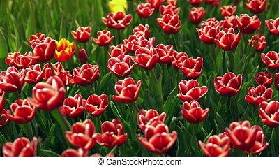 цветы, трава, зеленый, красочный