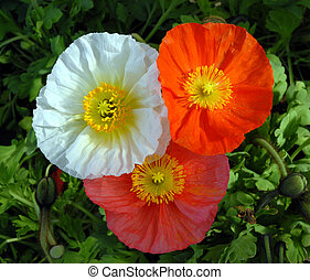 цветы, три