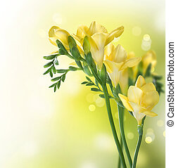 цветы, фрезия