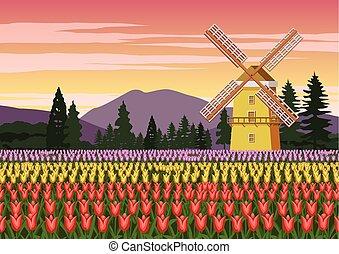 цвет, сад, ветер, символ, мельница, голландия, природа, тюльпан, известный, вокруг, марочный, красивая