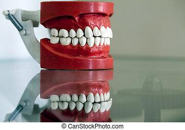 цирконий, фарфор, зуб, пластина
