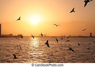 чайка, море, залив
