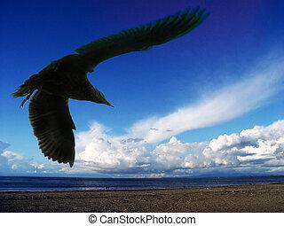 чайка, море