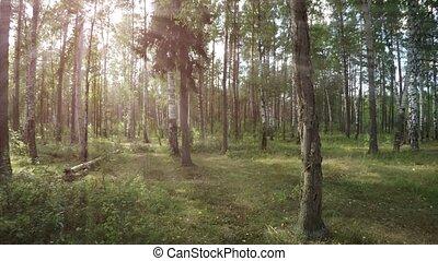 через, лес, ветви, дерево, это, звук, умеренный, sunbeams, фильтр