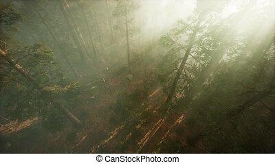 через, поломка, дерево, сосна, трутень, туман, красное ...