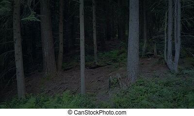 через, прохождение, лесистая местность, сумрак