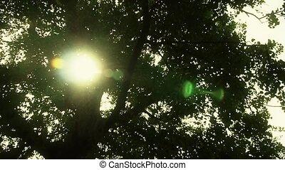 через, солнечный лучик, гинкго, дерево