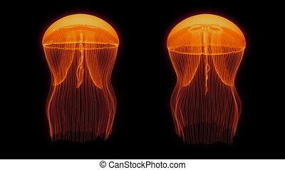 черный, петля, активы, медуза, оранжевый