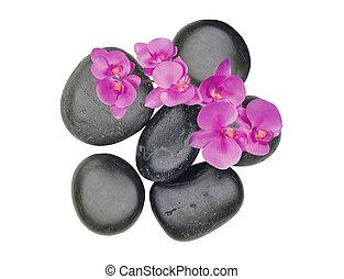 черный, спа, stones, and, розовый, орхидея, цветок, isolated, на, белый