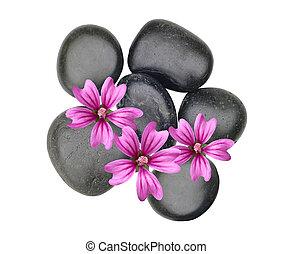 черный, спа, stones, and, розовый, цветы, isolated, на, белый