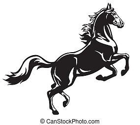 черный, rearing, лошадь, белый