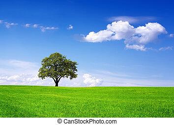 чистый, окружающая среда