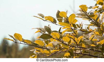 широкий, выстрел, вишня, leaves, autumn., динамический, ассортимент, крупным планом, сырье