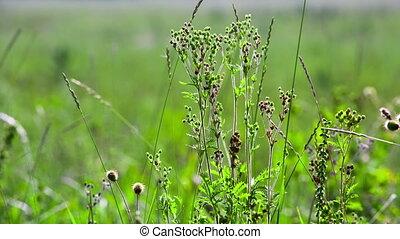 широкий, выстрел, динамический, macro., поле, ассортимент, зеленый, трава, сырье