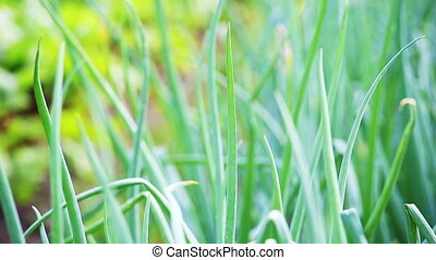 широкий, выстрел, лук, динамический, leaves, macro., ассортимент, зеленый, сырье