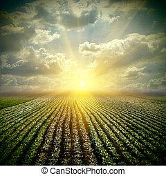 штраф, поле, капуста, небо, штат висконсин