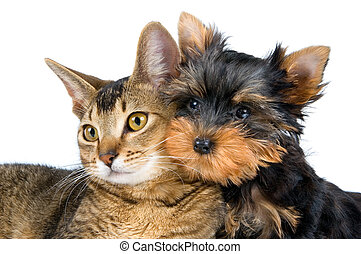 щенок, котенок