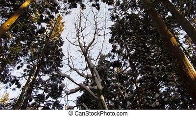 япония, зима, лес