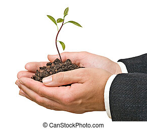 אבוקדו, עץ, ב, ידיים, כפי, a, מתנה, של, חקלאות