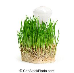 אור, אנרגיה, symbolizing, ירוק, נורת חשמל, דשא