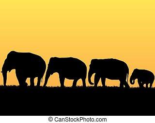 אפריקני, רקע, פילים