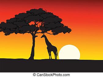 אפריקני, שקיעה, רקע, gira