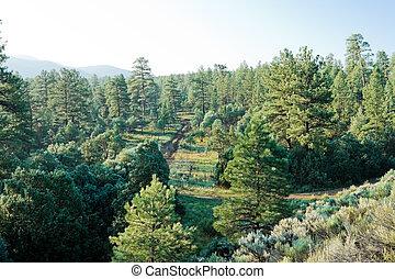 ארהב, מקסיקו, דאב יער, חדש, קור, עלית שמש, טאוים