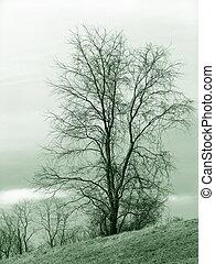 בודד, עץ