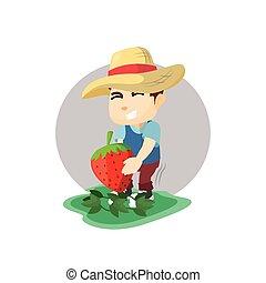 בחור, ענקי, תות שדה