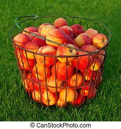 בשל, תפוחי עץ אדומים, ב, ה, דשא ירוק