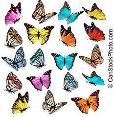 גדול, אוסף, של, צבעוני, butterflies., וקטור