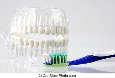 גהות של השיניים