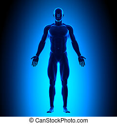 גוף, כחול, מלא, כונך, -, השקפה של חזית