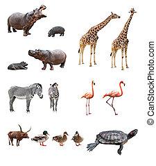 גן חיות, בעלי חיים