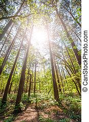 דאב יער, עלית שמש