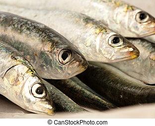 דג לא מבושל