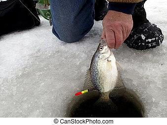 דייג, כראפפי, למשוך, קרח