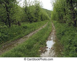 דרך כפרית