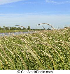 דשא, באיזורי הכפר, עם, שמיים כחולים
