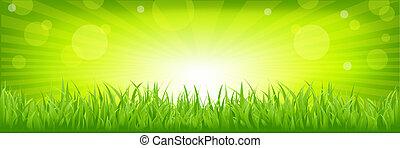 דשא, עם, רקע ירוק