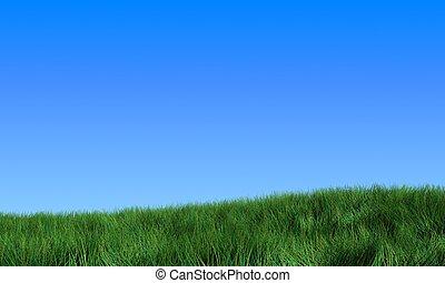 דשא של תחום