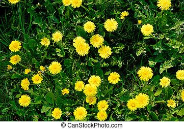 דשא, 5